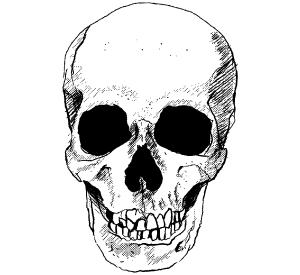 025-vector-skull-image